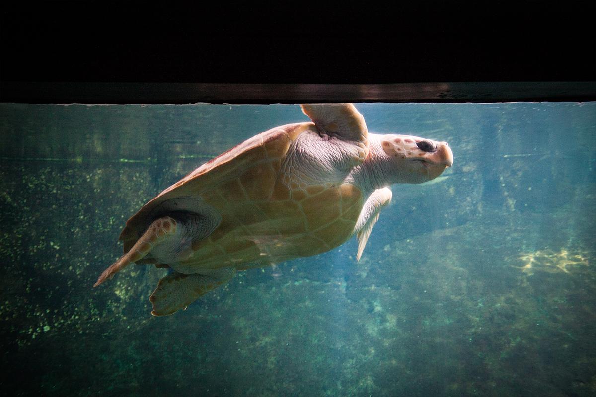 Nausicaa Grootste Aquarium van Europa